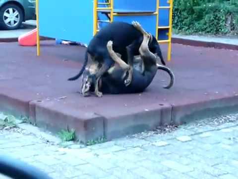 uma en barbouche chien du courant bruno du jura