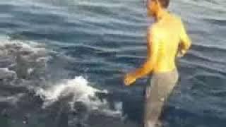 سوار شدن یک ماهیگیر ایرانی بر روی یک « کوسه نهنگی»