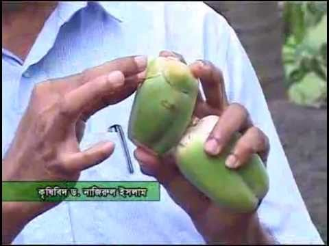 Banglar Krishi 49 (Naricaler Makor, Alu add, Bij Songrokon, mono Sex telepia)