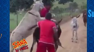 DONKEY MATING FULL HD VIDEO || FUNNY VIDEO