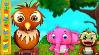Owl Song | Sing-along Kindergarten Nursery Rhymes | Songs for Kids by Little Treehouse