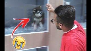 أخيراً زرت عيال كلبي روي 😱 !!