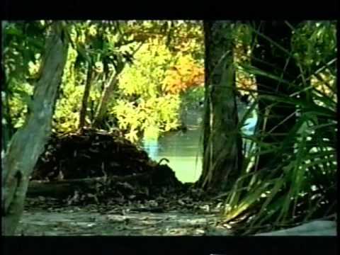 Território do crocodilo Dublado