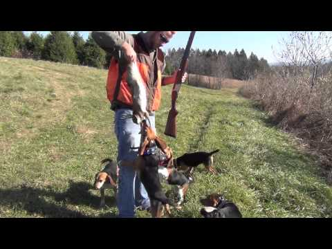 Rabbit Hunting In PA and ME 2012 2013