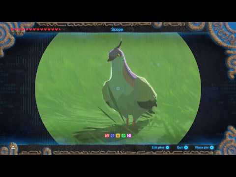 Just a pigeon | Breath of the Wild