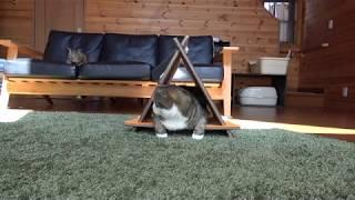 三角爪とぎとねこ。-Triangle scratching board and Maru.-