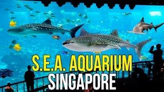 Океанариум в Сингапуре - Сентоза в Сингапуре, Океанариум S.E.A. Aquarium ☼