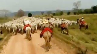 Tião Carreiro e Pardinho - Travessia do Araguaia - Sertaneja Raiz;