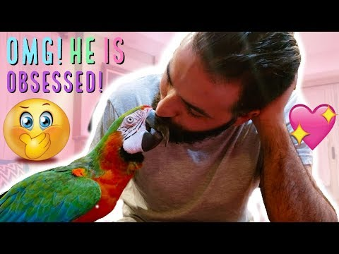 MY PARROT REACTS TO THE PRESENT HE HAS BEEN WAITING FOR YEARS FOR