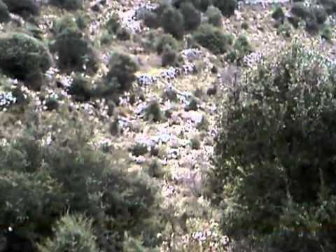 GOUROUNIA AGRIA KINIGI ΓΟΥΡΟΥΝΙΑ 2011 HPEIROS ΗΠΕΙΡΟΣ