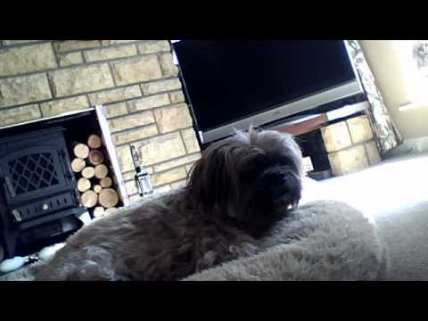 Xxx Mp4 Fizz My Nans Dog Xxx 3gp Sex