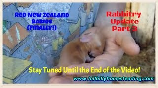 Rabbits-Overdue Rabbit Update 10-9-2011 Part 3 Red New Zealand Babies Finally!.mp4