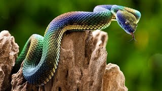 Most UNBELIEVABLE Iridescent Animals In The World!