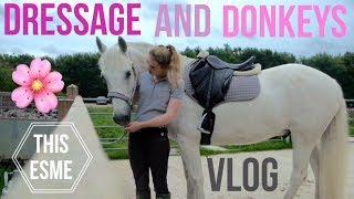 Vlog | Dressage and Donkeys | This Esme