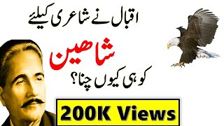 8 Qualities of Eagle/ Shaheen bird| Why Iqbal choosed eagle for his Poetry- Abdus Samad shah