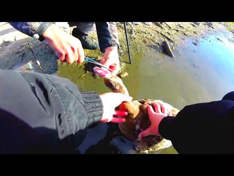 видео неожиданная рыбалка