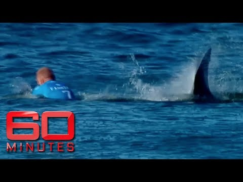 Xxx Mp4 Surfing Legend Mick Fanning Opens Up On Being Attacked By A Great White Shark 60 Minutes Australia 3gp Sex