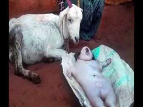 OMG ! Goat gives birth to human baby, MIRACLE OR GENETIC DISORDER?