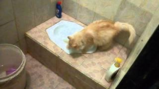 kucing boker di wc by sujikamotto