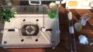 Setting up an AntKit All-in-One Ytong Formicarium / Ant Farm