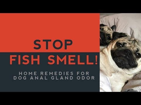 Xxx Mp4 Home Remedies For Dog Anal Gland Smell 3gp Sex