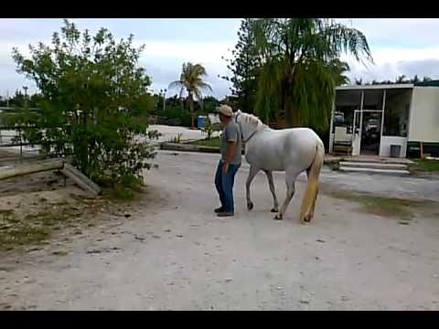Horse following bf