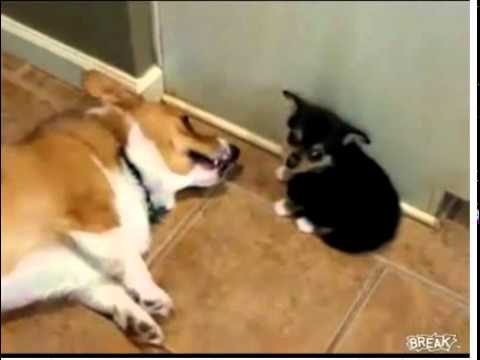 Filhote peida na cara do cão