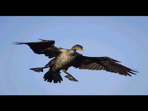 Funny Bird Crashing Animal Fails