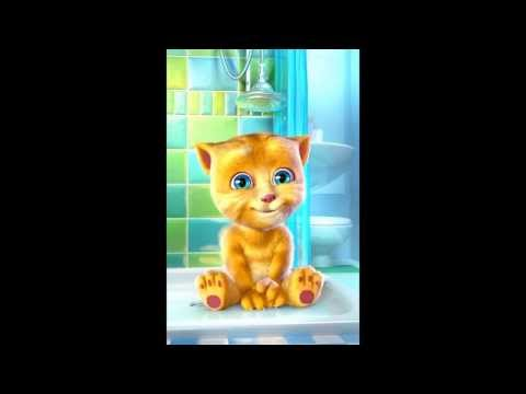 Xxx Mp4 Loll My Video Of Ginger The Talking Cat Xxx 3gp Sex