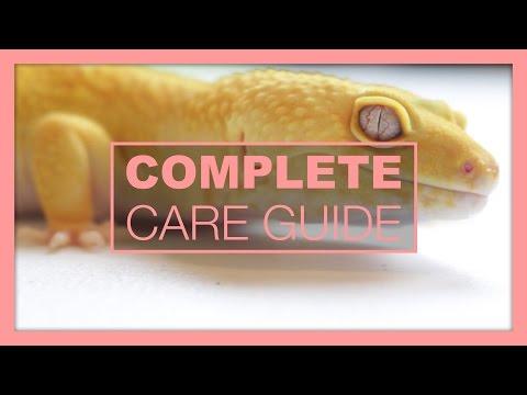 Complete Leopard Gecko Care & Setup Guide
