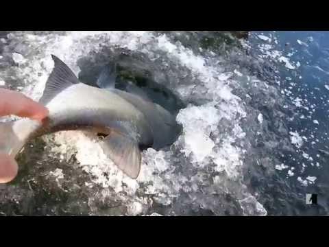 рыбалка на морского леща