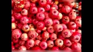 المناظر الخريفية ومشاهد الحصاد في أنحاء الصين|CCTV Arabic