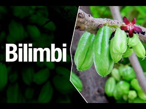 Bilimbi Fruta Safari Garden Plantas Exóticas