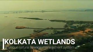 Kolkata Wetlands - A unique natural sewage management system