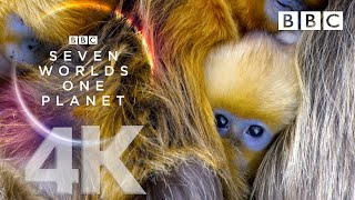 Seven Worlds, One Planet: Extended Trailer (ft Sia and Hans Zimmer) | New David Attenborough Series