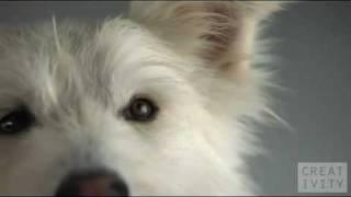 Pedigree Highspeed Dog Commercial