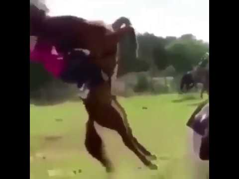 Xxx Mp4 HORSE FALLS ON TOP OF LADY 3gp Sex