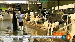 Iran Cattle & Dairy farming, Ahmad Moghadasi farmer احمد مقدسي كشاورز پرورش گاو گوشتي و شيرده ايران