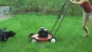 Ellie vs lawn mower: cute dog; dachsador