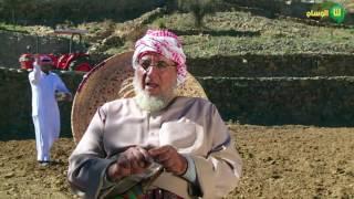 البر الأسمري من الزراعة الى الحصاد