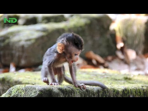 Xxx Mp4 Strong Baby Monkey No Need His Mom Anymore Nature Daily 3gp Sex