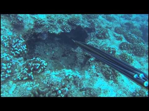 Hawaii Spearfishing A Diver Kind of Life