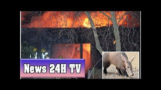 Aardvark missing after blaze ripped through london zoo cafe | News 24H TV