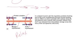 All or none muscle contraction
