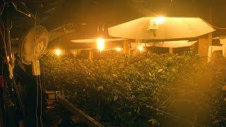 World's illegal largest MARIJUANA plantation - Shock - Cellar !
