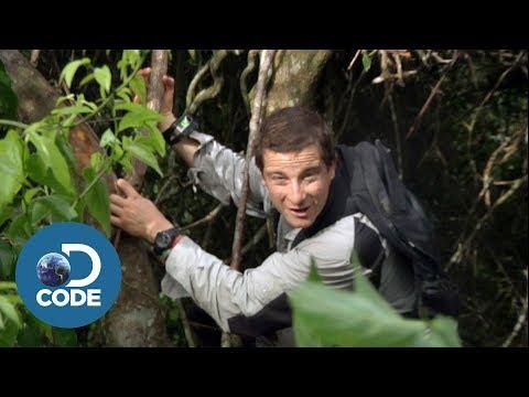Xxx Mp4 Bear Grylls In Borneo Jungle Man Vs Wild 1 6 3gp Sex
