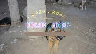 توقع الفشل اذا كنت تحب الكلاب لربح المال / انتبه من اقترابك لكلبه والده مع كابتن ابونور 01003035709