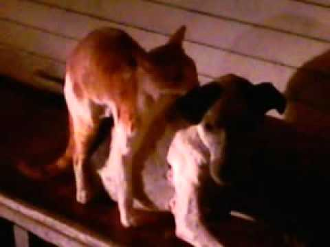 Xxx Mp4 Indin Cat Rep In Dog 3gp Sex