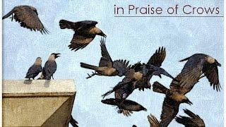 হটাৎ মতিজিল যাওয়ার পথে আকাশে  এত কাকের মেলা দেখে শখের বসে ভিডিও করে ফেললাম (crow of dhaka city)