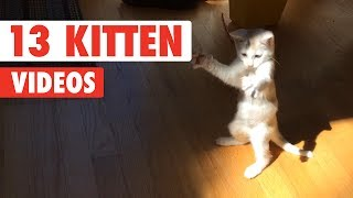 Funny Kittens   Funny Cat Video Compilation 2017